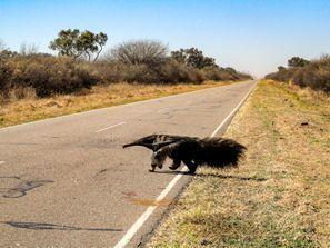 Automobilių nuoma Resistensija, Argentina