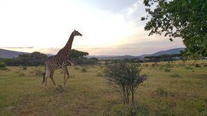 Automobilių nuoma Rustenburg, Pietų Afrika
